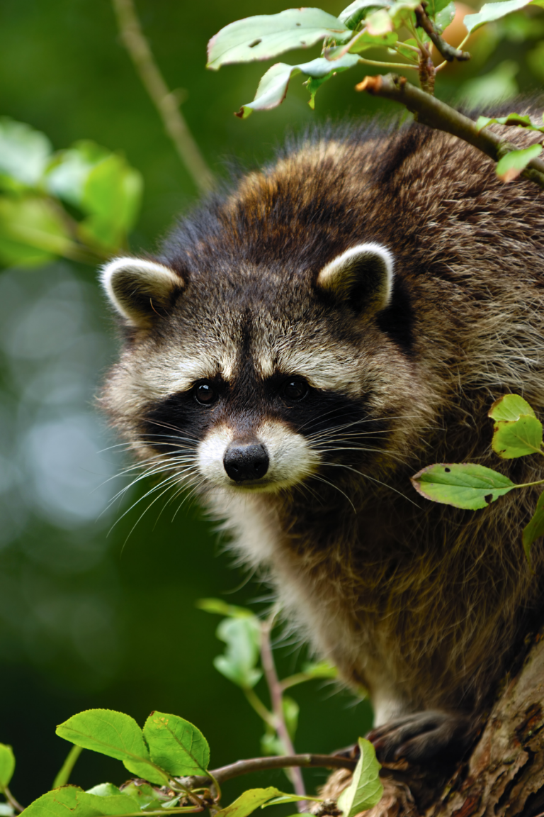 Does Composting Attract Animals?