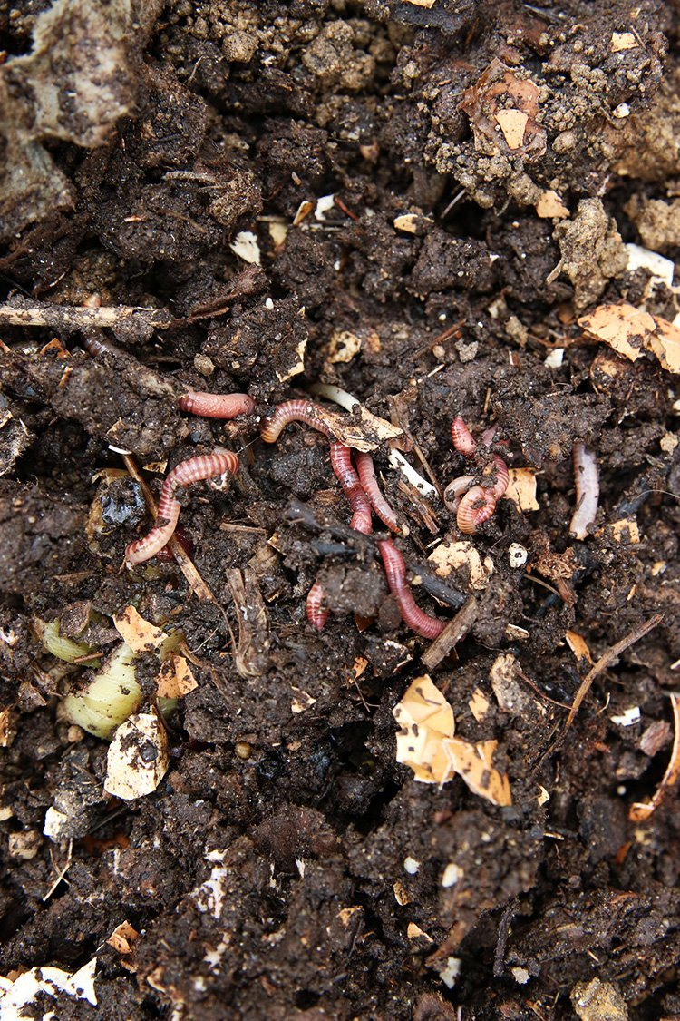 Should A Compost Pile Be In The Sun or Shade?